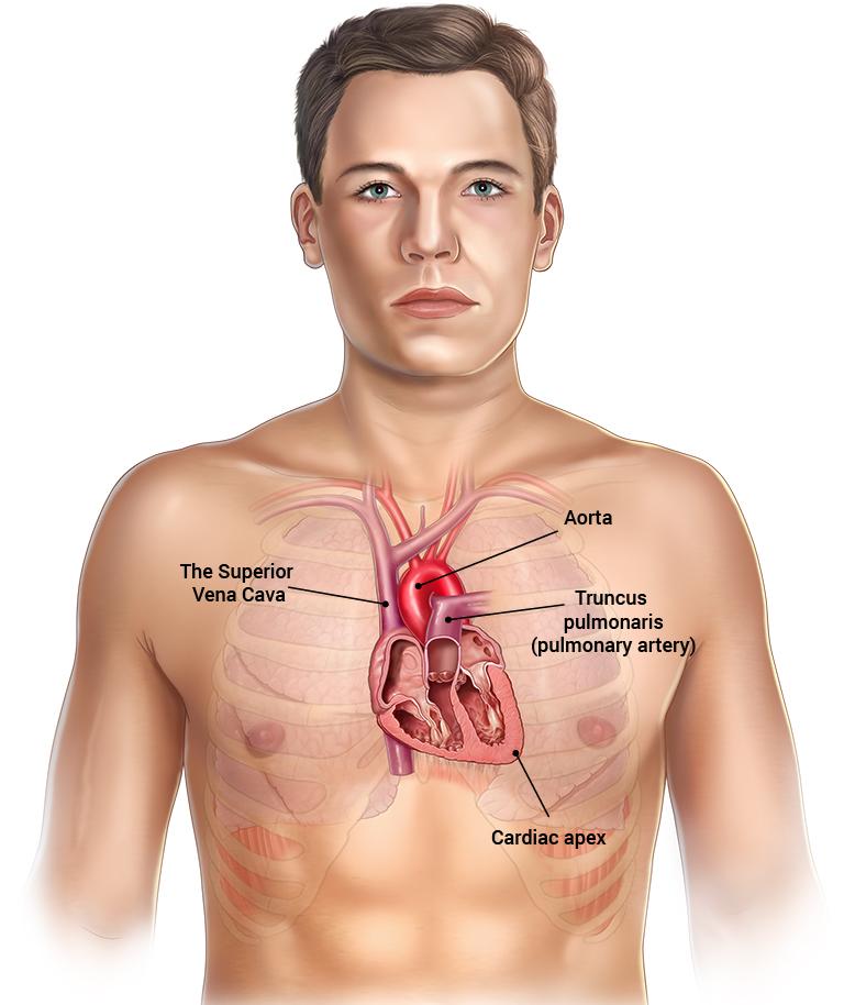 erasmus, Human Body